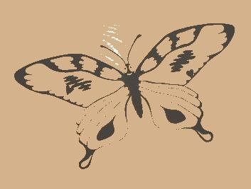 papillon-transp